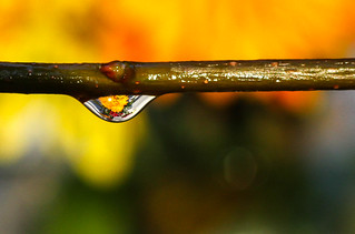 Refracted image in a drop