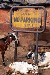 Be Indulgent - Goats Can