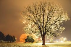 Ice Glazed Tree