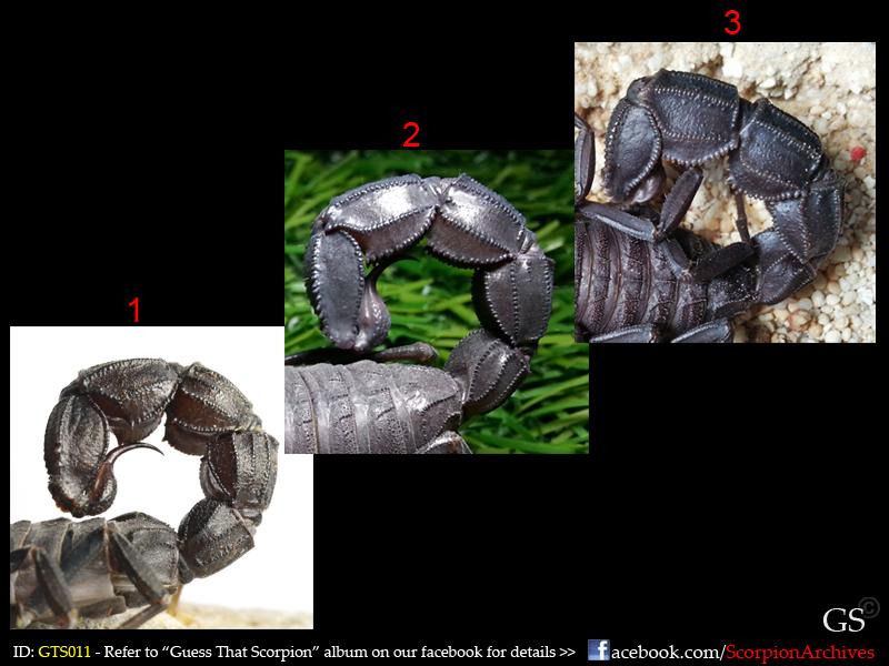 Guess That Scorpion (GTS) 12347851704_0d998dd8f8_o