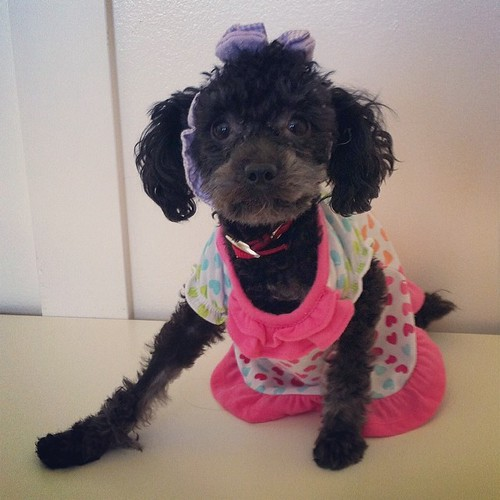 @shelleyallan @andrewallann @ashleyisford @nathanallan @matthewrallan Dear family: thanks for leaving me with the twin girl cousins. I feel totally humiliated right now as they dress me in doll clothes. At least they love me to pieces. #saveme #toypoodles