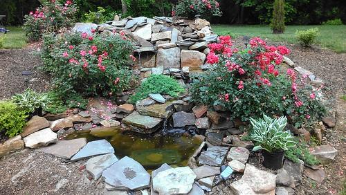 pond backyard sanctuary