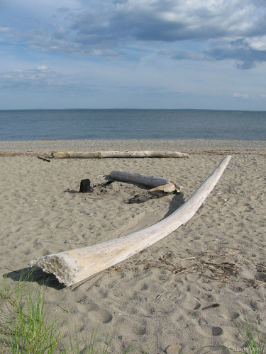 Driftwood by Coyoty
