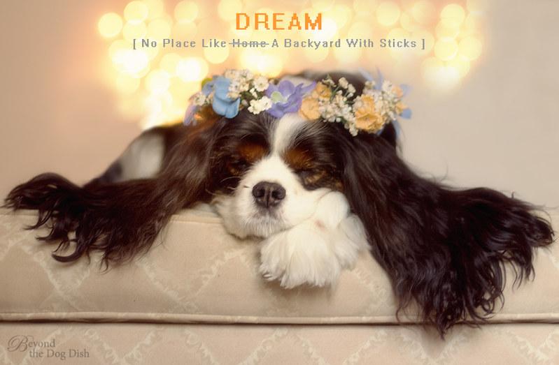 20140330-49_960-72_Dream_btdd
