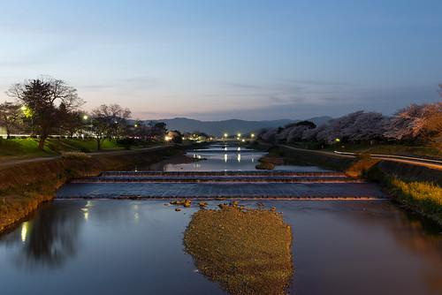 sunset japan night river landscape spring twilight kyoto 桜 日本 cherryblossoms 風景 夕焼け kamoriver 2014 春 左京区 京都市 京都府 賀茂川 nikond600 pwpartlycloudy