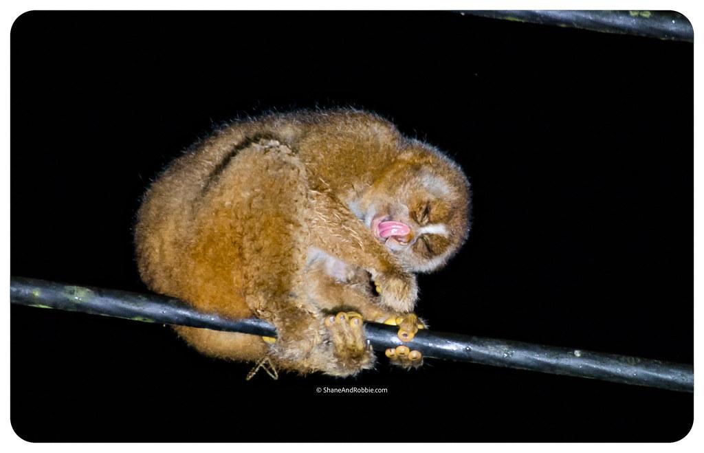 Borneo-20170411-_MG_7814