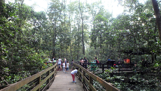 Pasir Ris Mangrove boardwalk tour with the Naked Hermit Crabs