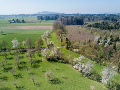 Frooholz, Klarsreuti