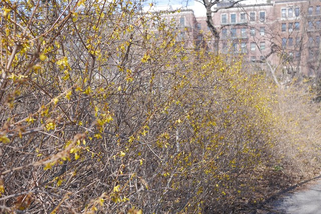 日, 2017-04-02 13:49 - Brooklyn Botanical Garden