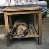 It's a cat's life! #sunnyspot #sunseeker