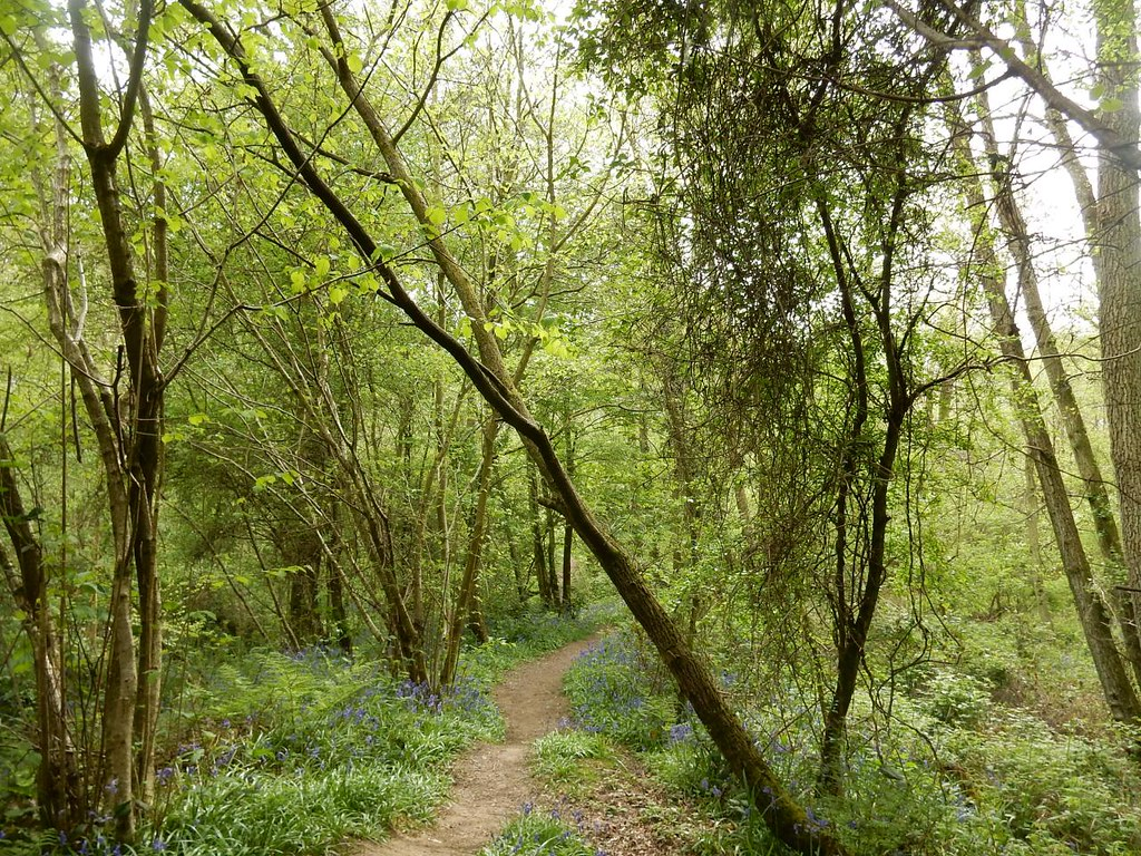 woodland path Hever to Ashurst