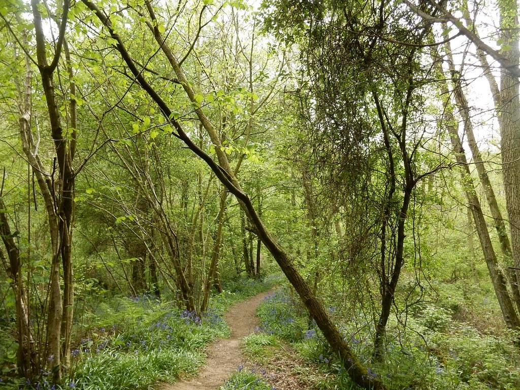 woodland path Hever to Ashurst