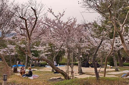 【写真】2013 桜 : 円山公園(2)/2020-11-17/IMGP9277