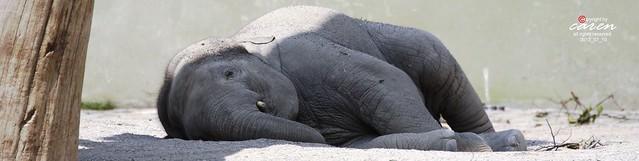 Elefantenjunge Ludwig 2013_07_10 425