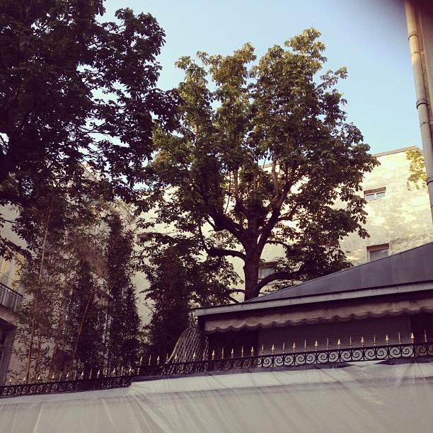 La chambre, les arbres du 5bis rue de Verneuil #gainsbourg #sergegainsbourg