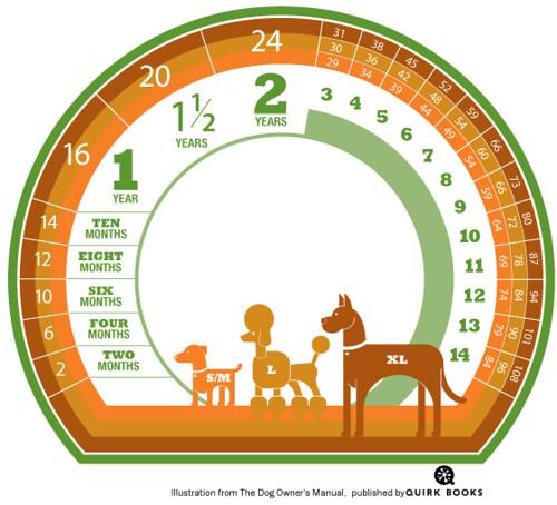 Dog Aging Chart