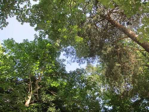 Ft. Paxwood woods