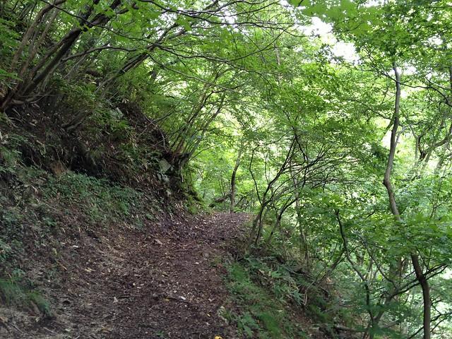 鍋倉山-気持ちの良い緑のトンネル
