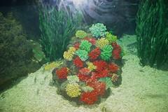 coral reef fish(0.0), coral reef(1.0), coral(1.0), organism(1.0), marine biology(1.0), stony coral(1.0), marine invertebrates(1.0), freshwater aquarium(1.0), underwater(1.0), reef(1.0), sea anemone(1.0),