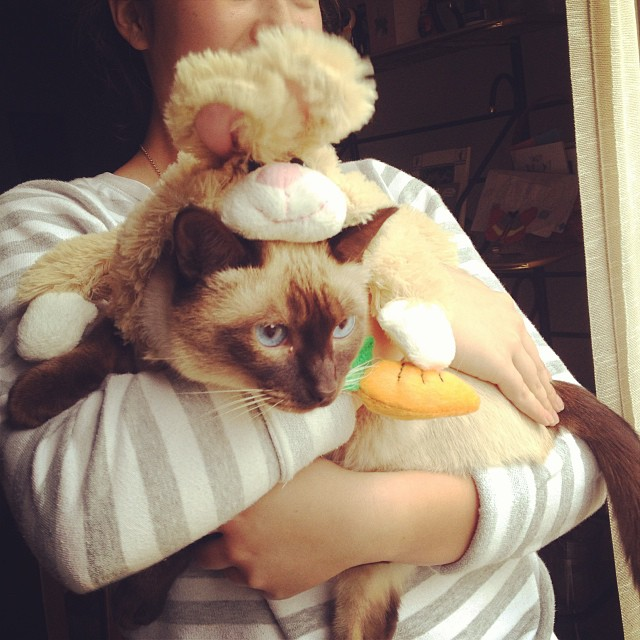 Oh how we torture our pets. Happy Halloween! #costume #siamese #cat
