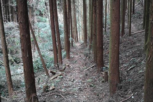 上醍醐寺参道