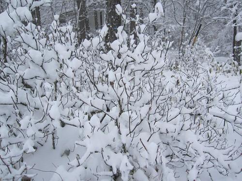 ⑤雪をかぶった木・・神秘的です by Poran111
