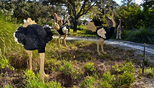 -Legoland, Florida - Safari ride - ostrich art