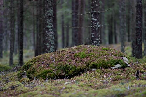 nature zeiss sweden d800 jönköpingcounty aposonnart2135