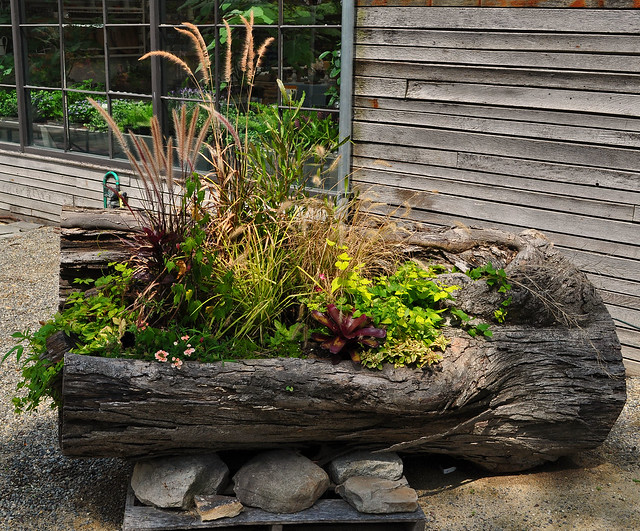 A tidewater gardener old habits for Upcycled tree stumps