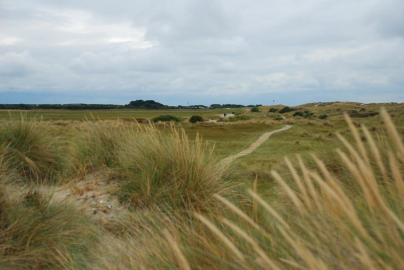 被稱為「沙丘的命脈」的Marram grass具有重要的固沙功能