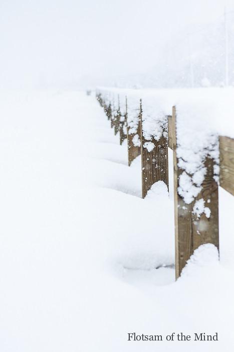 Snowy Posts - Flotsam of the Mind