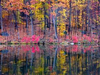 Pink Bush in Autumn