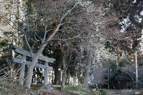 埼玉梅歩き-24