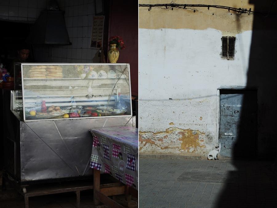 bezdomne koty maroko