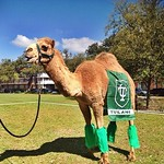 Can you guess what day it is? #HappyHumpDay at Tulane