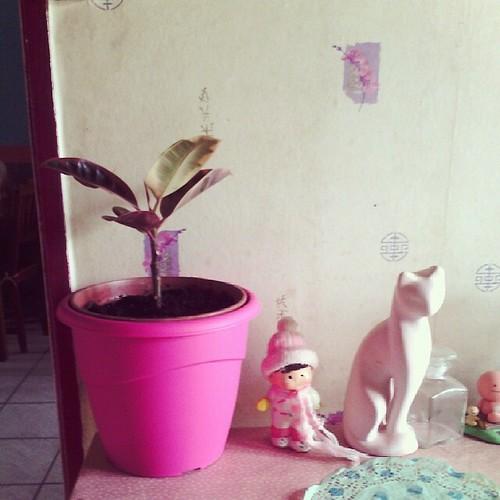 Quand mon homme achète des vases girly, je l'adore. #ourlittlefamily #girly #france  #rose