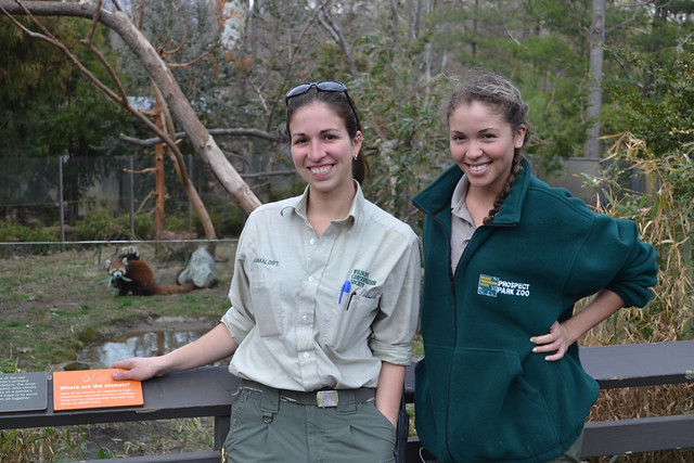 Prospect Park Zoo's Gwen Cruz, senior keeper, and Carolina Duque, wildlife intern,  say the red pandas are happy to take some of BBG's bamboo if its hands. Photo by Elizabeth Peters.