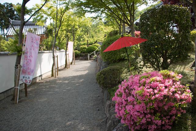 20160430-鳴神山-0344.jpg