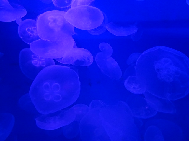 Photo:クラゲの光アート (The World of Jelly Fish) By inazakira