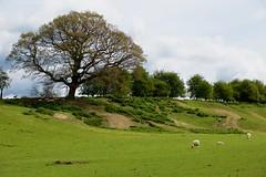 Stoneacre - Kent in April 2017