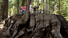 Big Trees 07