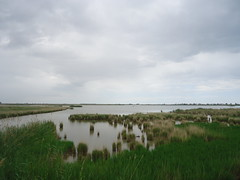 polder(0.0), reservoir(0.0), sea(0.0), lake(0.0), mudflat(0.0), reflection(0.0), shore(0.0), wetland(1.0), estuary(1.0), prairie(1.0), horizon(1.0), cloud(1.0), grass(1.0), river(1.0), plain(1.0), loch(1.0), natural environment(1.0), meadow(1.0), salt marsh(1.0), rural area(1.0), grassland(1.0), waterway(1.0), bog(1.0),