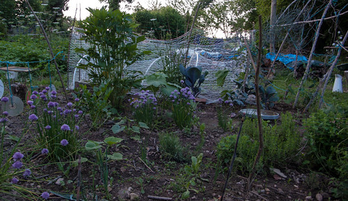 Herbal garden at sunset