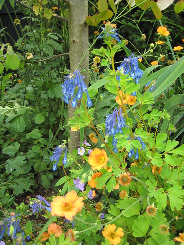 Corydalis and Geum