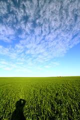 Crop Australia