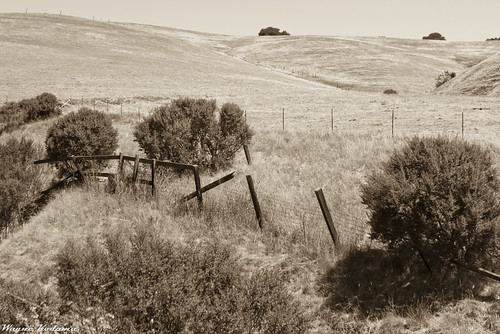 Fences by Wayne-K