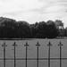 Schapen achter hek