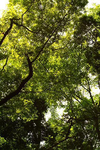 明治神宮の森3 by leicadaisuki