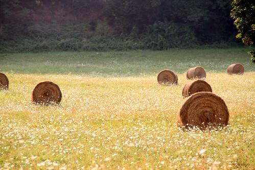 rouleaux d'été ! by montestier