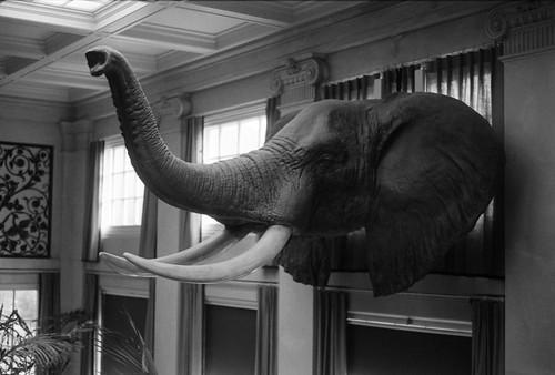 Eastman's Elephant